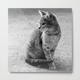 Lloyd- Black and White Cat Photography Metal Print