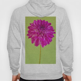 Close-up image of the flower dahlia on green background. Shallow depth of field. Hoody