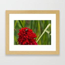 Red Flower And Beetle Framed Art Print