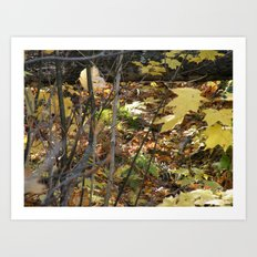 Woodsy abstract Art Print