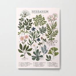 Herbarium ~ vintage inspired botanical art print ~ white Metal Print