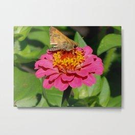Light moth landing Metal Print