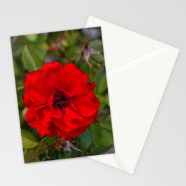 Vibrant Red Flower Stationery Cards