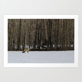 Beautiful Red Fox, No. 1 Art Print