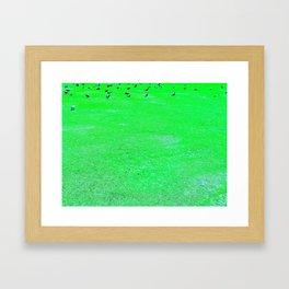 Birds On The Green Lawn Framed Art Print