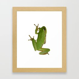 Green Tree Frog Framed Art Print