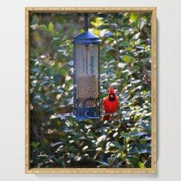 Cardinal At Bird Feeder Serving Tray