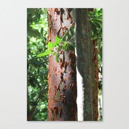 Paper Thin Canvas Print