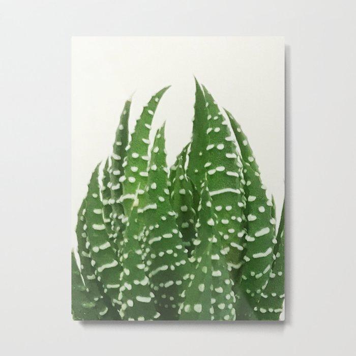 zebra haworthia Metal Print