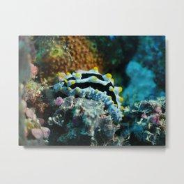 Common nudibranch portrait Metal Print