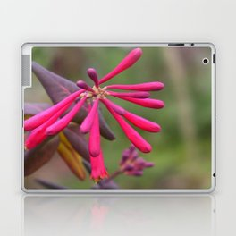 Trumpet Honeysuckle - Buds of Coral Woodbine  Laptop & iPad Skin
