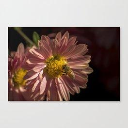 Honeybee on a Flower Canvas Print