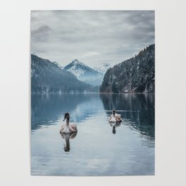 Couple of swans, romantic scene in bavarian alps Poster