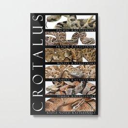 Rattlesnakes - Crotalus Metal Print