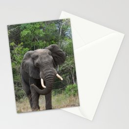 African Elephant Stationery Cards