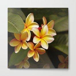 Elegant Simplicity is the Hawaiian Plumeria Metal Print