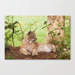 Lynx Lynx Canvas Print