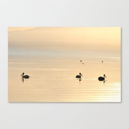 WHITE PELICANS - SUNSET - SALTON SEA Canvas Print