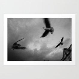 RiverGulls - 3 Art Print