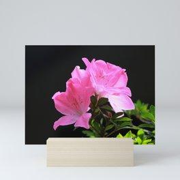 Satsuki azalea bonsai pink fowlers Mini Art Print