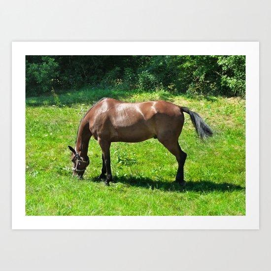 A Grazing Horse Art Print