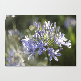 African Lily Bokeh Delight Canvas Print