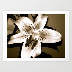 Lily Art Print