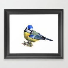 Bluetit Framed Art Print