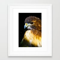falcon Framed Art Prints featuring FALCON by MY MEMORY IS SHOT