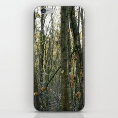 Wood for the trees iPhone & iPod Skin