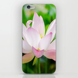 Single Water Lily iPhone Skin
