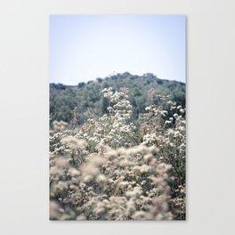 Buckwheat Afternoon Canvas Print