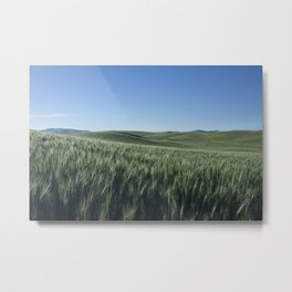 Wheat Fields Photography Print Metal Print