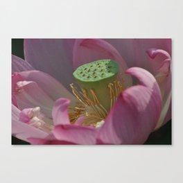 Summer Lotus Canvas Print
