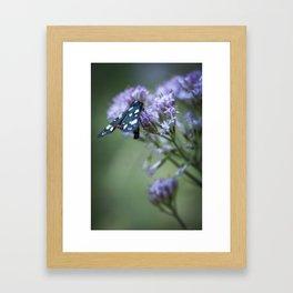 A black butterfly on a wildflower Framed Art Print