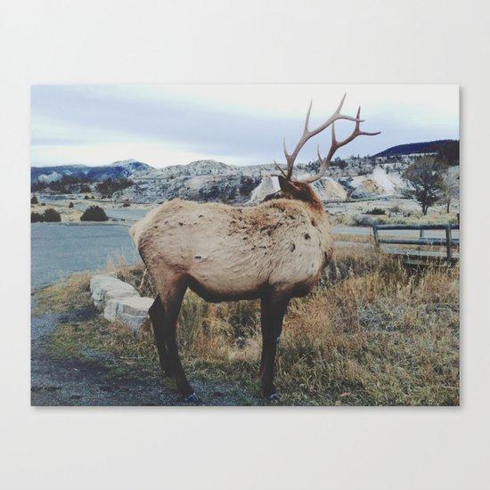 Mammoth Elk Canvas Print