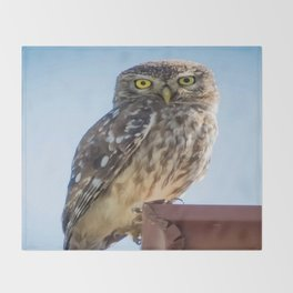 Cute Barn Owl Making Eye Contact Vector Throw Blanket