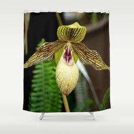 Paph. Harold Koopowitz Orchid Shower Curtain