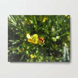 Ladybug crawling around Metal Print