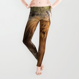 Cute hungry ginger Scottish Highland cow Leggings