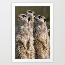 Meerkats on Guard Art Print