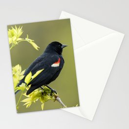 Perched Red-Winged Blackbird Stationery Cards