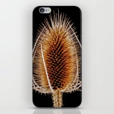 Natural Teasel iPhone & iPod Skin