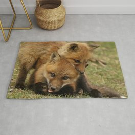 Fox kits wrestle Rug