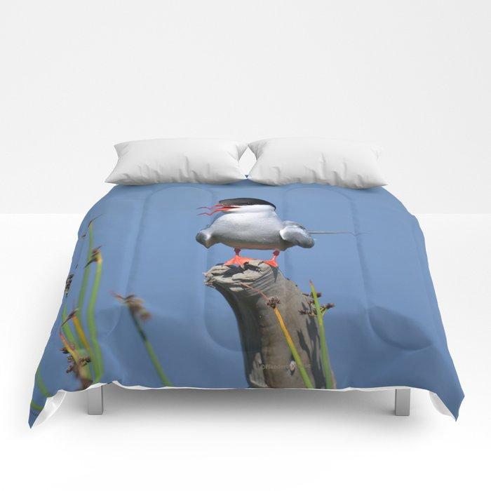 Arctic Tern Comforters