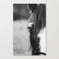 Blue Eye - horse photography Canvas Print