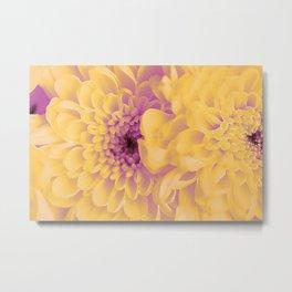 Yellow asters. Metal Print