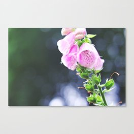 Inside the Blooms Canvas Print