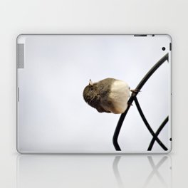 Pretty Winter Junco Laptop & iPad Skin