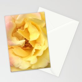 Summer Rose in Pink and Yellow Stationery Cards